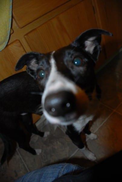 CorkSport-Pet-Profile-Joels-Dogs