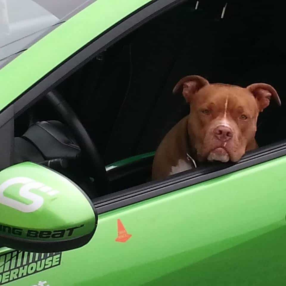 Keep your car clean even with your dog as your passenger.